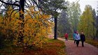 Ruska, an explosion of colour in Finnish forests
