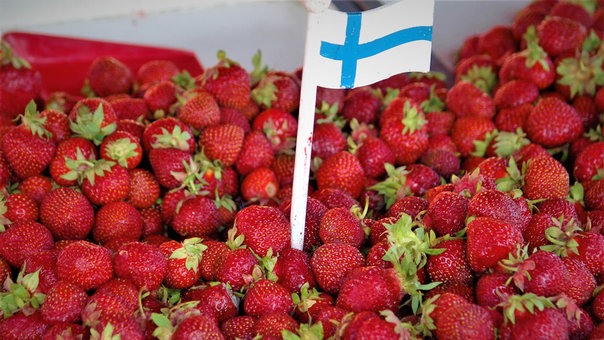 The great Finnish strawberry season has arrived!