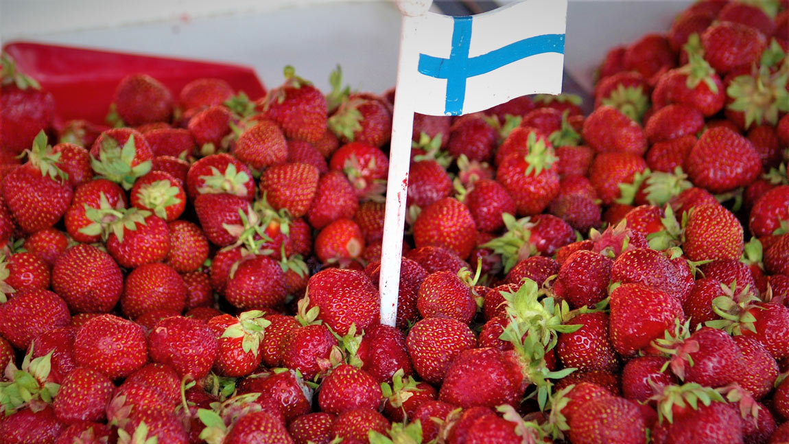 Finns say their strawberries are sweeter, tastier and more juicy. Photo: Foreigner.fi.