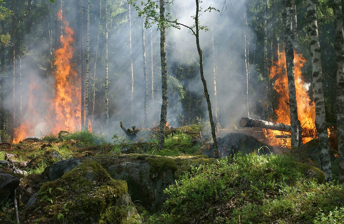More than 6,000 forest fires burning in Russia