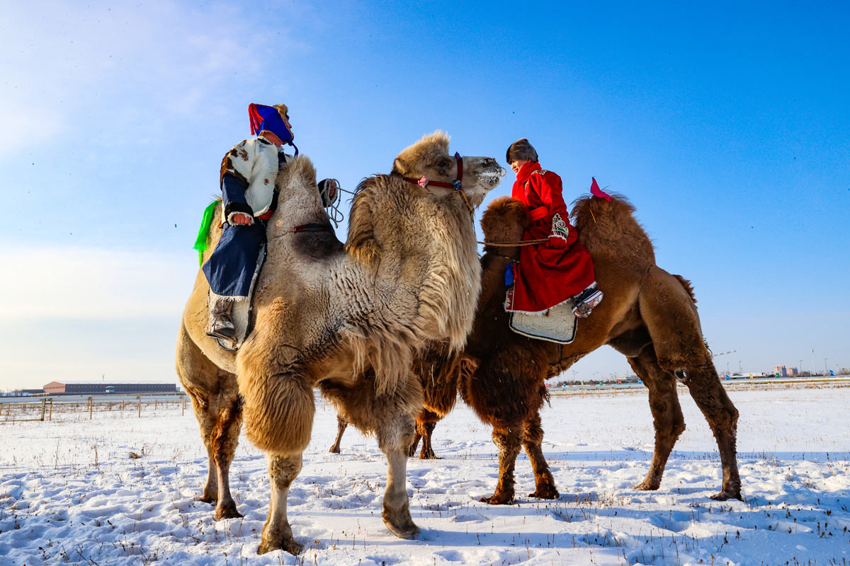 27 December 2020, China, Hulun Buir: Mongolians herders ride Bactrian camels as they take part in the camel beauty contest in Inner Mongolia. Photo: -/TPG via ZUMA Press/dpa